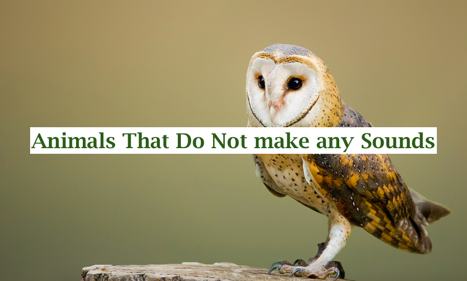 10 Animals That Do Not make any Sounds (Why are they so silent)
