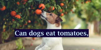 Can dogs eat tomatoes, Soup, Ketchup or Sauce? – 7 Things To Know