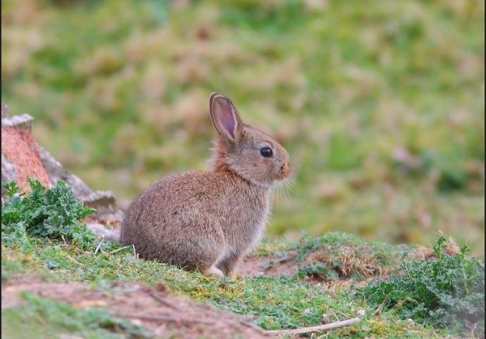 What are the most unusual rabbit breeds? 10 Best Pet Rabbit Breeds