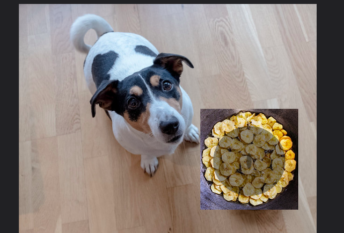 Can dogs eat bananas chips - 10 Things to Know (Deep-Fried or Baked?)